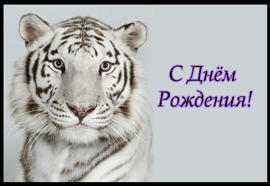 Поздравления с днем рождения тиграну 17